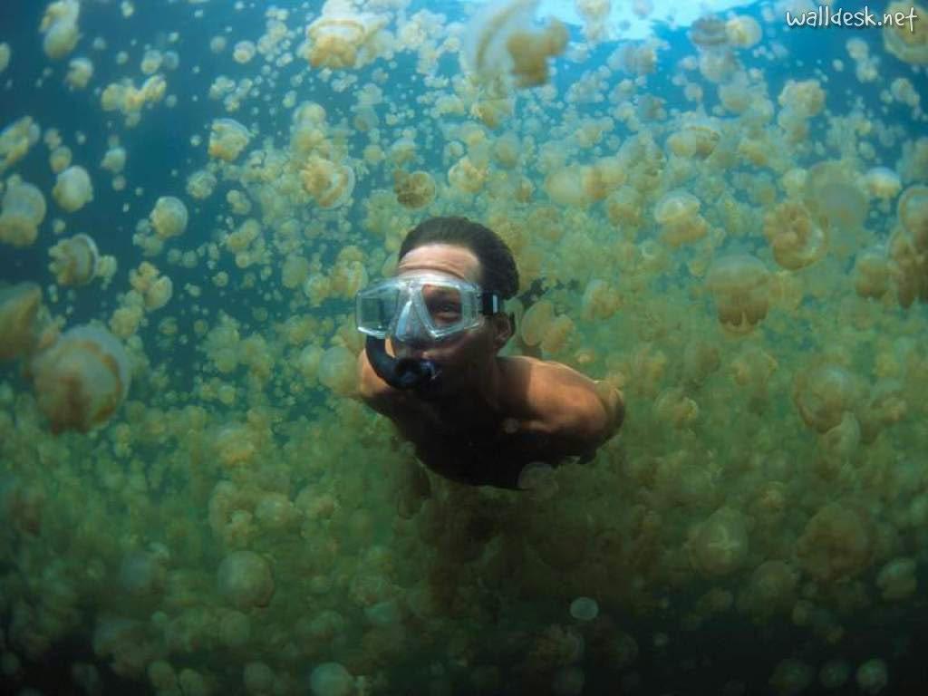 Ancient mariner redux harry and jellyfish lake for Hawaiian moon fish