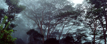 Timor - Liquiçá