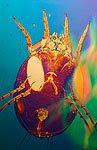 dust mite - closeup image