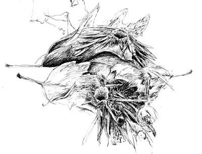 wolf spider dens