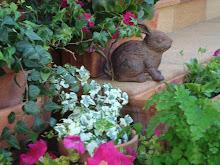 Mi jardín comienza a despertar