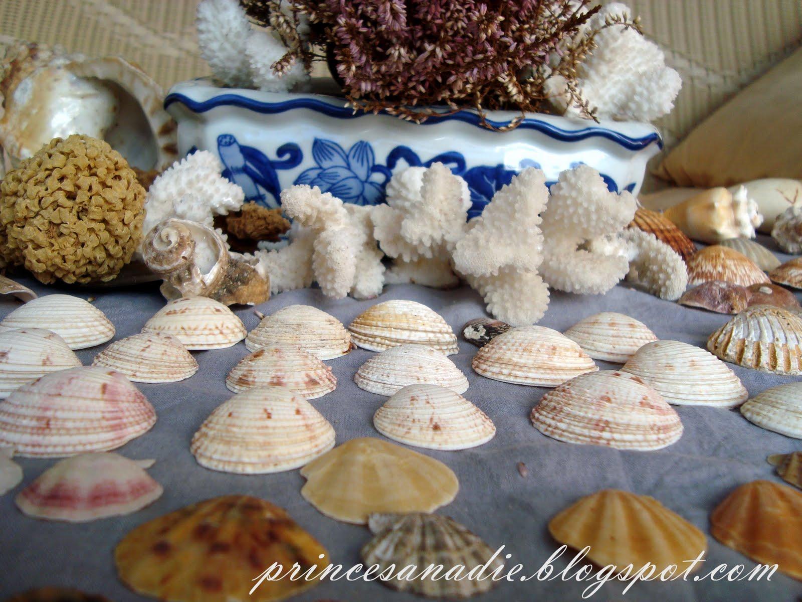 caracoles y conchas de mar.