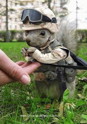 tiniest soldier
