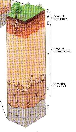 Partes del suelo