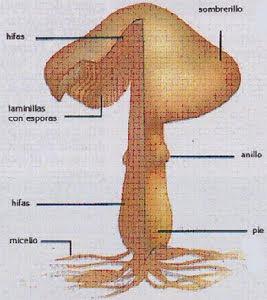 Como sanar rápidamente el hongo kandida