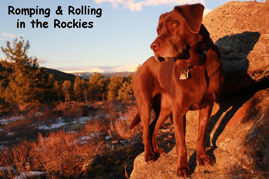 Romping and Rolling in the Rockies