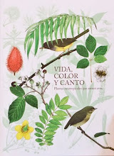 Vida, Color y Canto