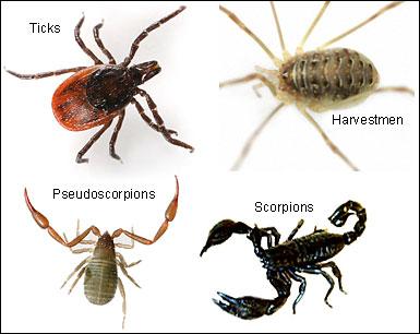 Science Year 3: Three invertebrate animal groups.