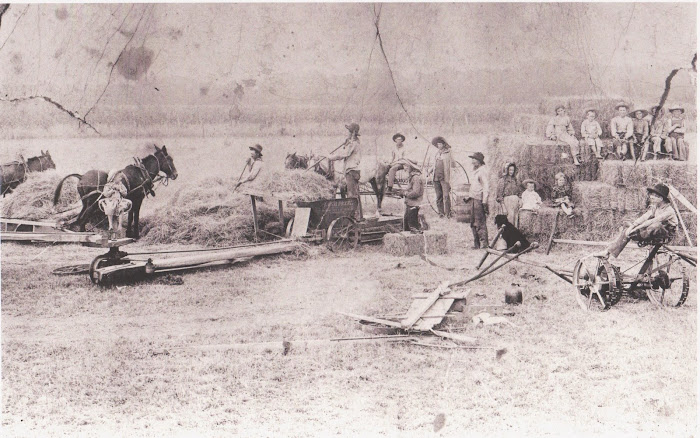 Willburn Family Haying about 1897