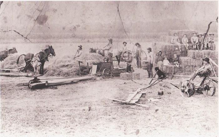 Willburn Family Haying about 1897