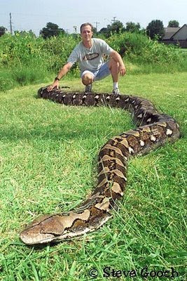 Information world: The Largest Snakes in the world