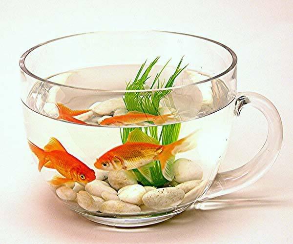 ปลาในเเก้ว.......