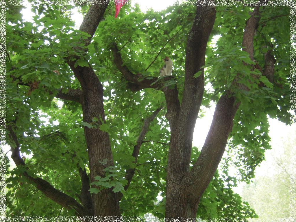 Meadow Creek Farm Tree Hugger