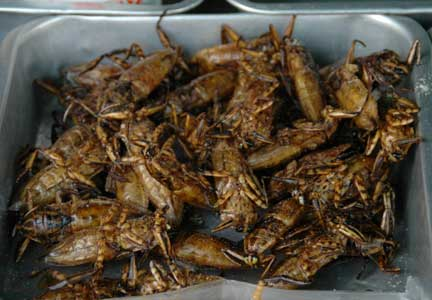 Insect+_thailand - ...ug karon, kan-on nato ang Insik, este, insect - Science and Research