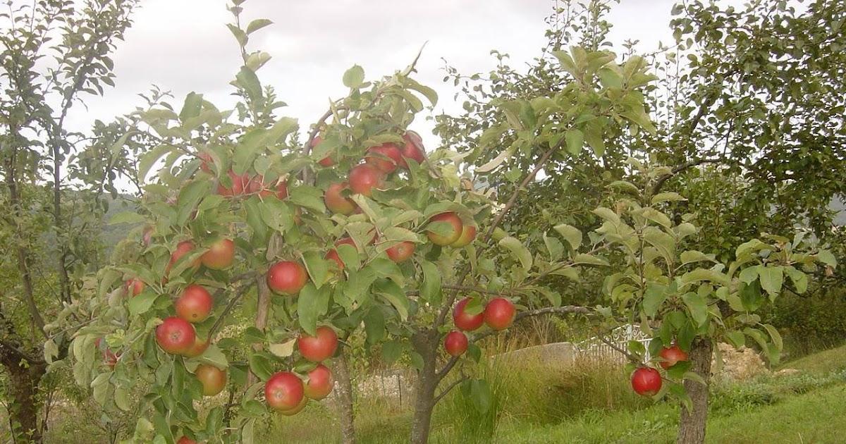 Casa y jardin arboles frutales en t jard n bons i - Plantar arboles frutales ...