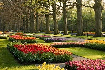Todo jardines el parque del keukenhof en amsterdam holanda - Jardines de holanda ...