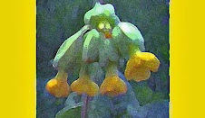 Ariel&#39;s Cowslip
