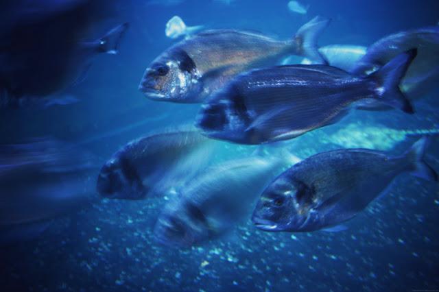 Cinéaqua aquarium de Paris Némo
