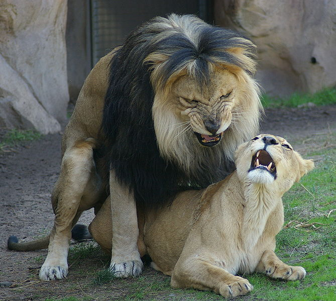 Wildlife Docs May Violate Animal Privacy