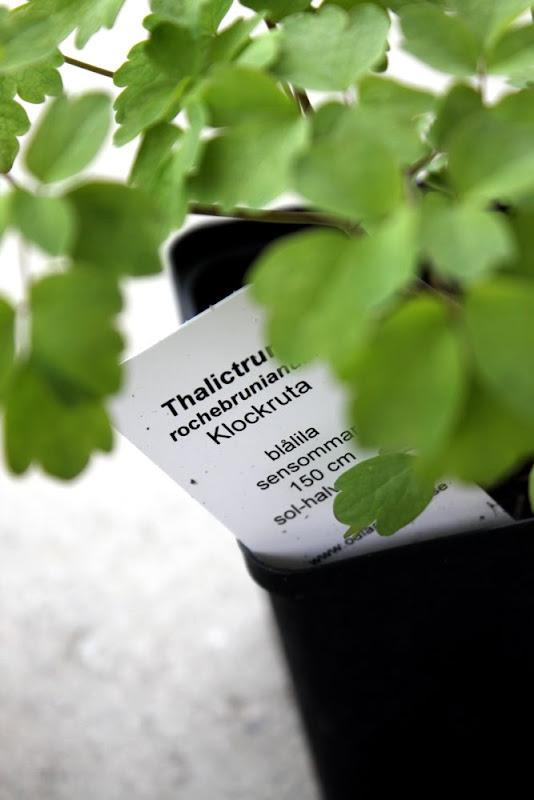 Thorins Trädgård