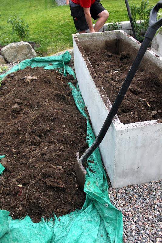 Trädgårdsblogg: Thorins Trädgård jordärtskocka