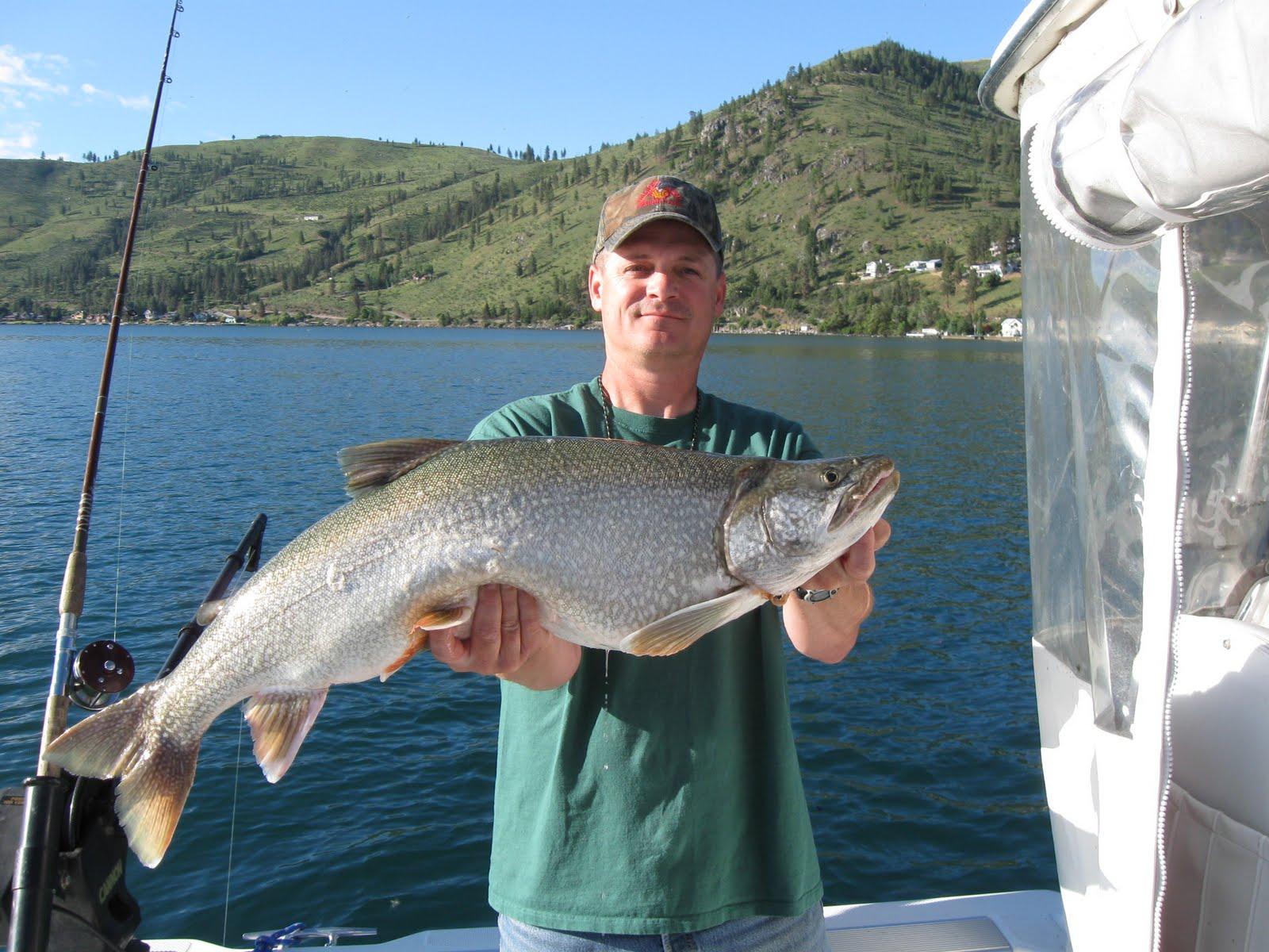 Northwest salmon and steelhead fishing lake chelan laker for Lake chelan fishing