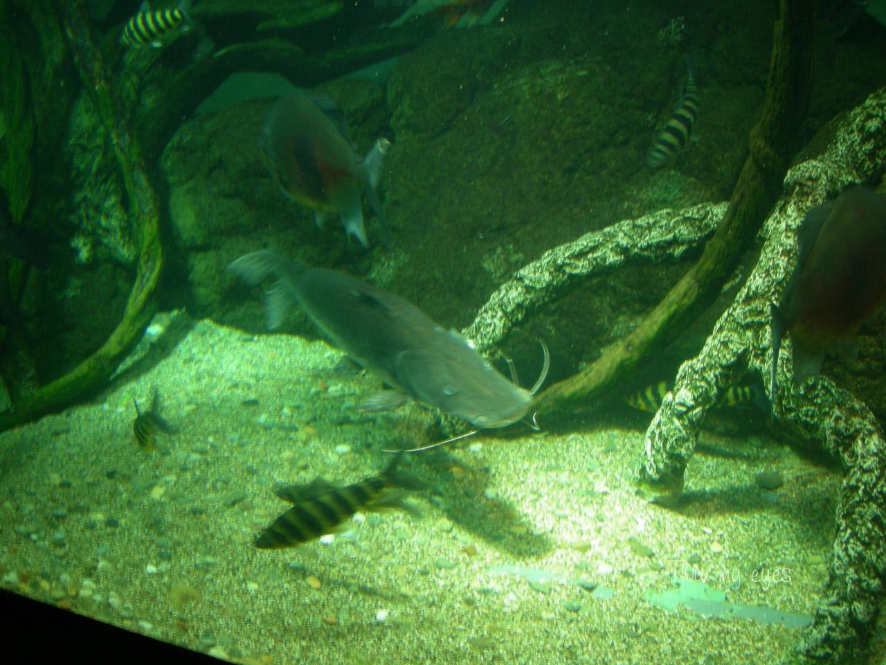Thru my eyes genova l 39 acquario for Pesce gatto acquario