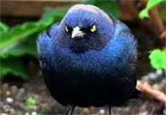 Follow me on Twitter... or angry bird will get angry