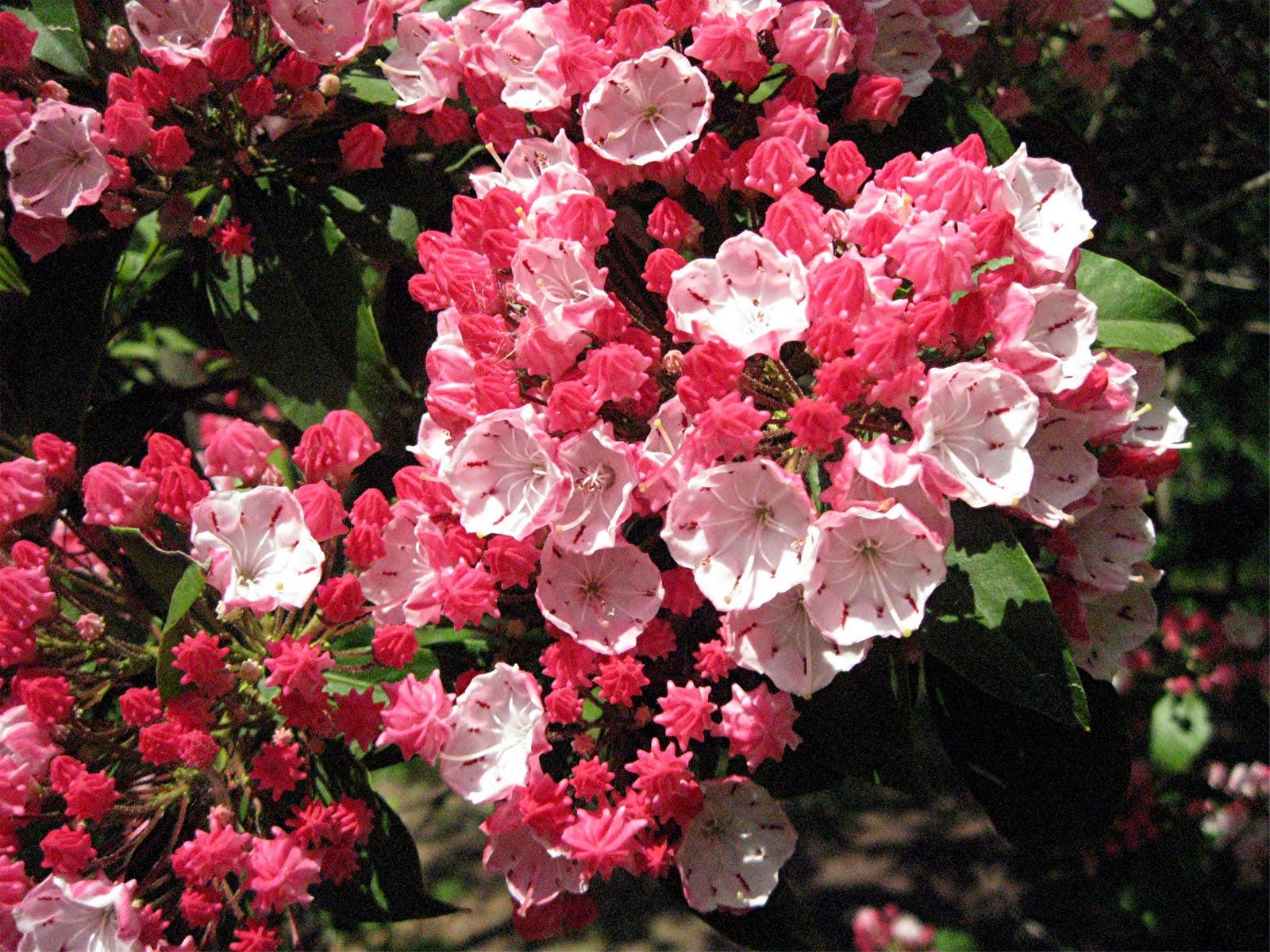 10 อันดับ ดอกไม้ที่อันตรายที่สุดในโลก