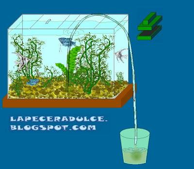 Peces tropicales de agua dulce limpieza y mantenimiento for Mantenimiento piscina agua salada