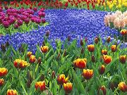 As Flores da Primavera. Neste entardecer tão belo. Entre todas as flores.