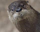 The Otter Spot