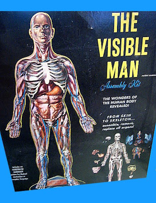 Scale Model News: SHADES OF RENWAL\'S VISIBLE MAN - CLEAR PARTS LET ...