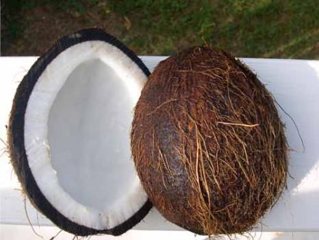 http://3.bp.blogspot.com/_THIqU_TTsHo/S7IcVkP8azI/AAAAAAAACUA/1F3wJ7mfkzQ/s1600/coconut+hair.jpg