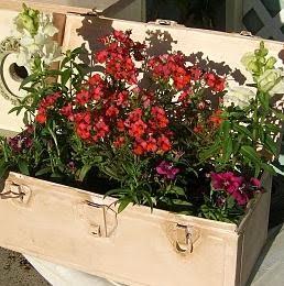 [ritas+plants]