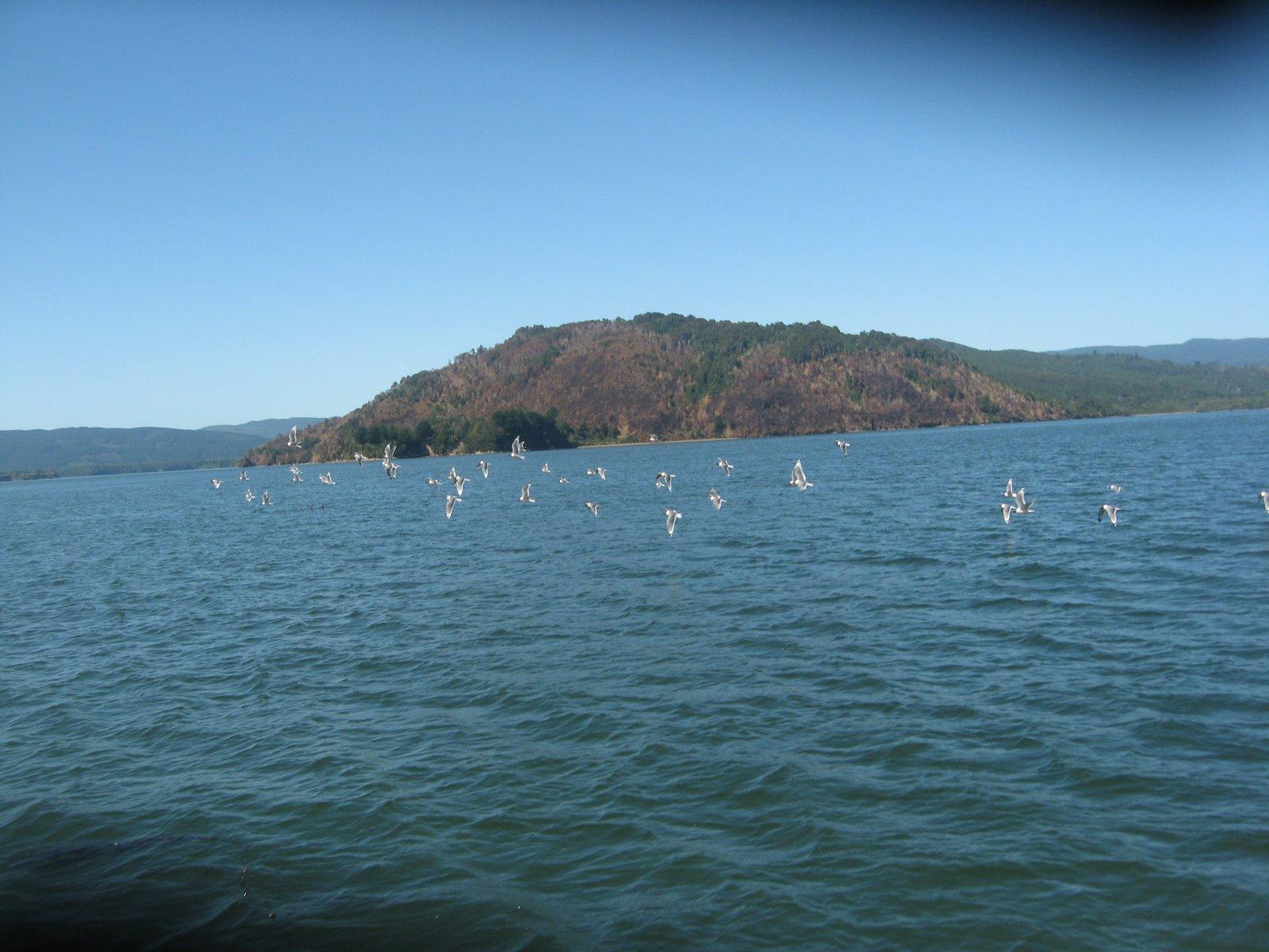 Isla Mancera un paraíso en el sur de CHILE