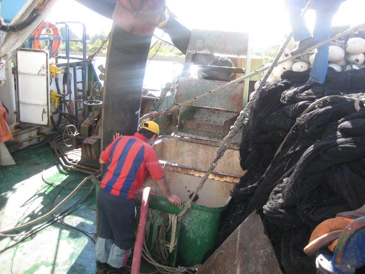 Barco Constitución cargando las sardinas a un camión