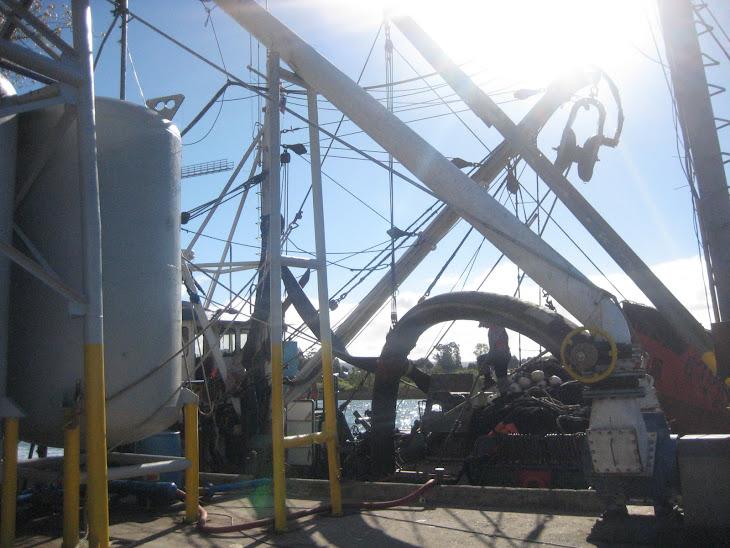 Succionando pescado del barco a un camión de transporte de la empresa Camanchaca de Coronel