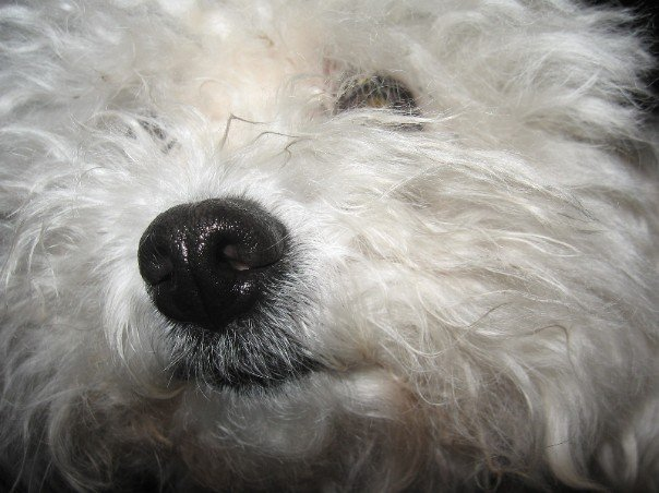 My Dog, Hanna