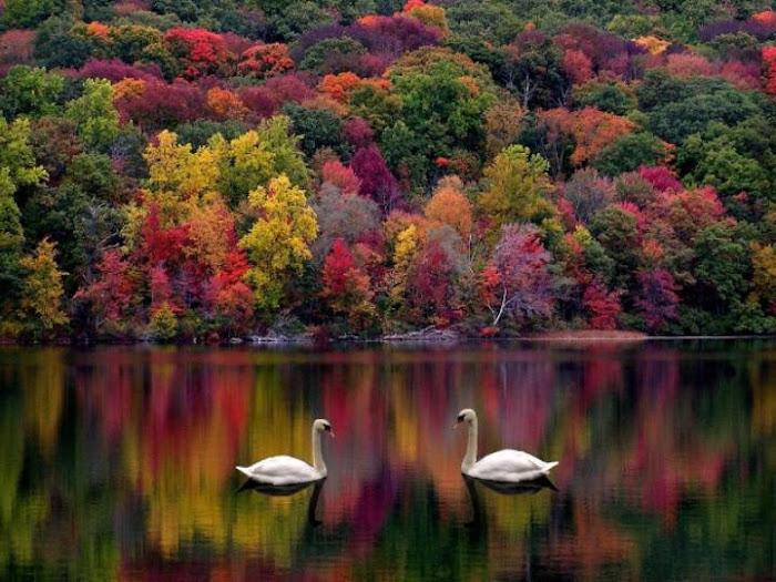 Es hermoso los grandes regalos que nos da la naturaleza simplemente bellisimos