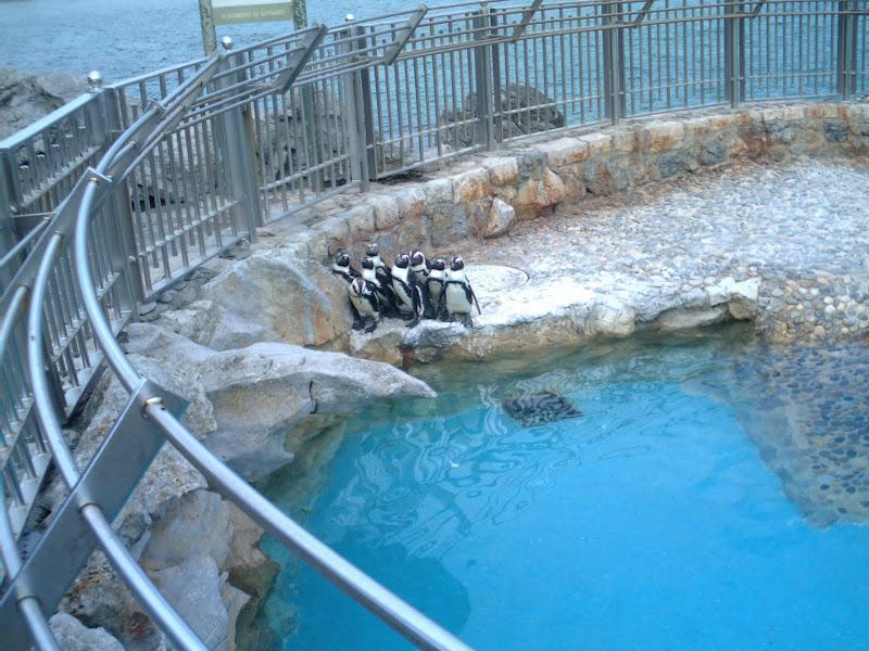 Grupo de pingüinos en la Península de la Magdalena