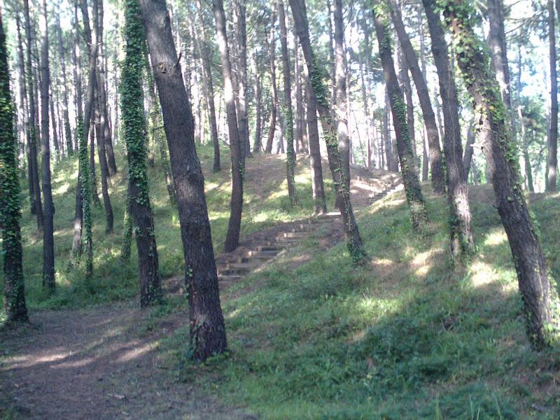sendero en pinar de Liencres