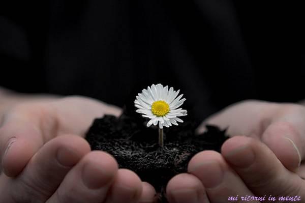 [flower.jpg]