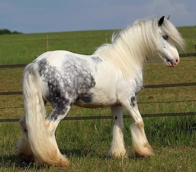 world's beautiful horses