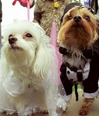Dress up dogs