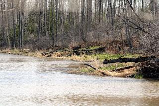 Wabi Creek