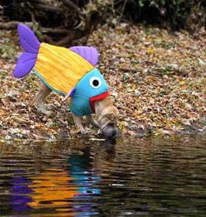Happy dog land halloween costume ideas for Water dogs fish