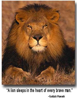 Caption Pair of male lions