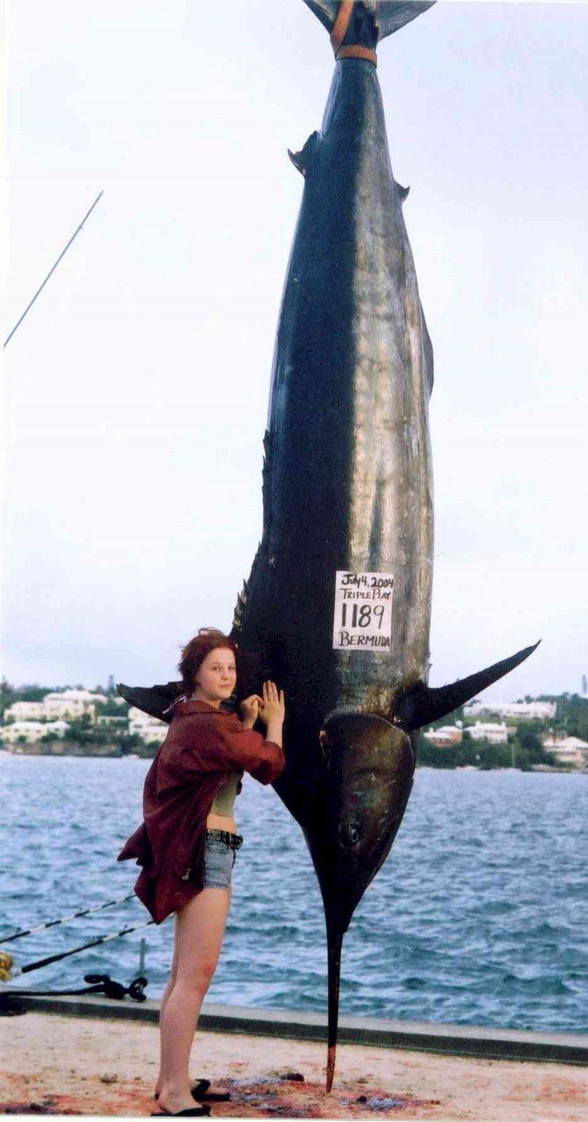 http://3.bp.blogspot.com/_TSvly6B1EI0/R1OQhfHIsKI/AAAAAAAAAbg/C7aAt1duLwQ/s1600-R/marlin_enorme.jpg