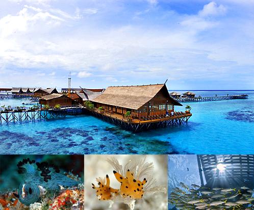 Mango Chics Sipadan Island